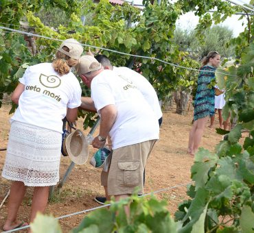 """We Do Local"": Traditional Harvest in Creta Maris Beach Resort"