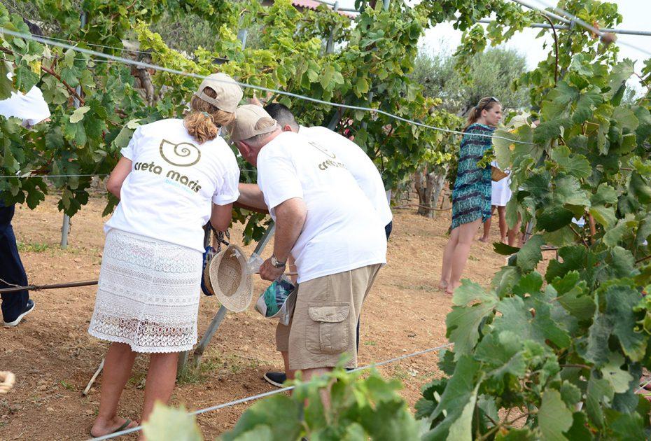 """We Do Local"": Traditional Harvest in Creta Maris Beach Resort"