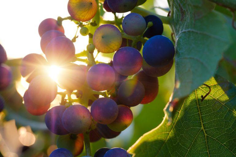 Cretan Wines History and Local Varieties