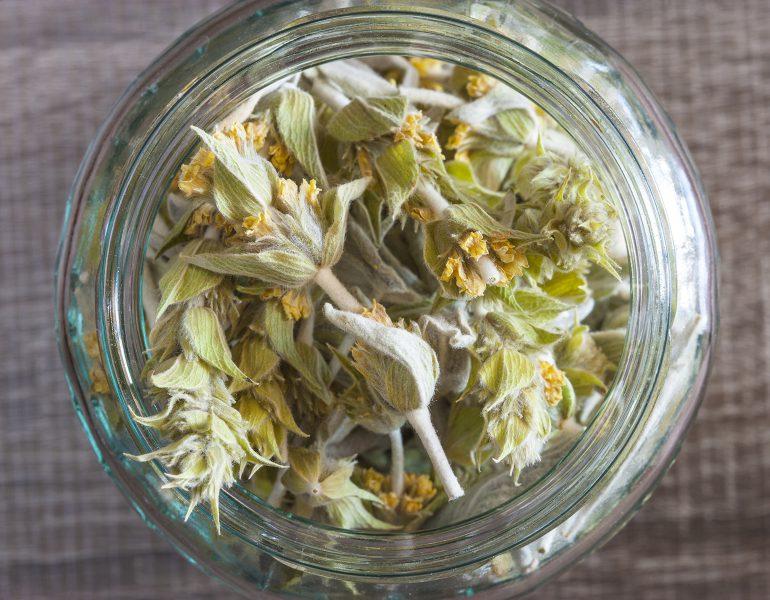 Malotira: Crete's miraculous mountain tea