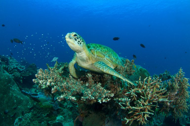 Join us in protecting Crete's turtles