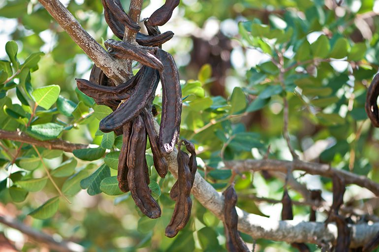 Carob: Crete's unknown superfood
