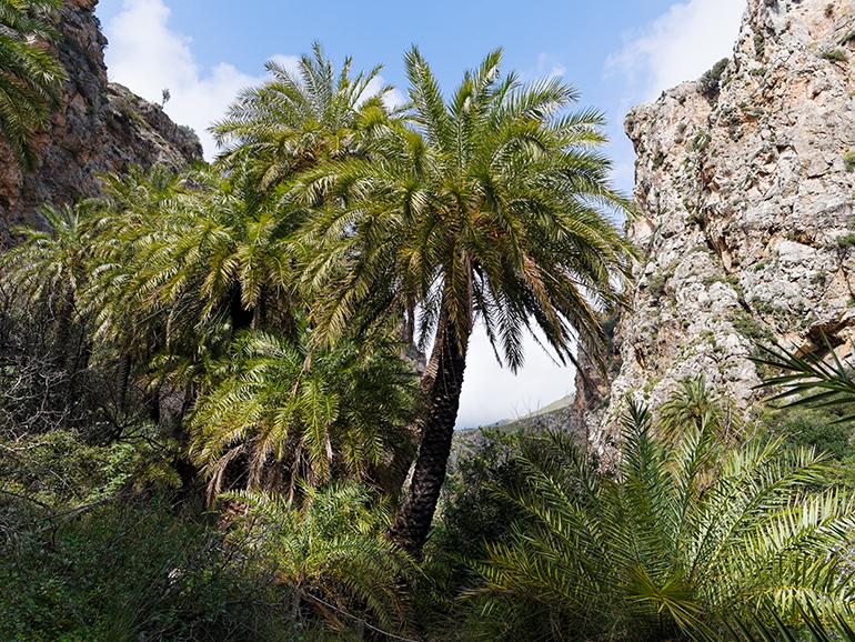 The biodiversity treasure of Crete: rare and endemic species