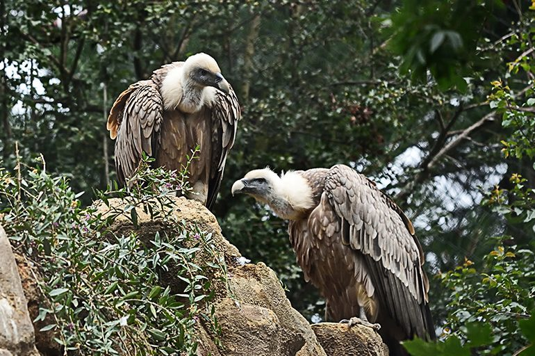 Vultures & wild birds of Crete