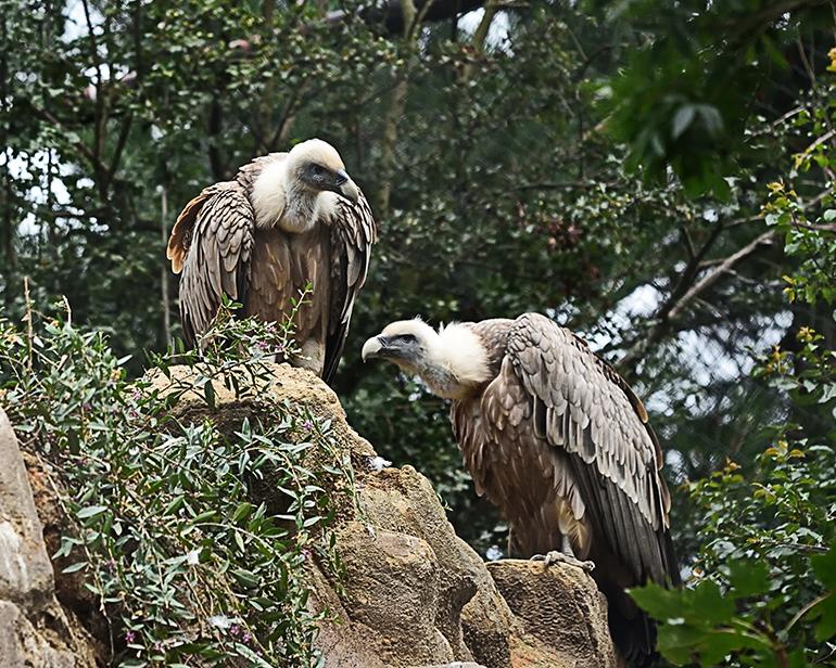 Vultures & wild birds of Crete